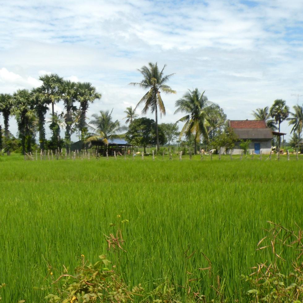 Kampot Cambodia work in the field
